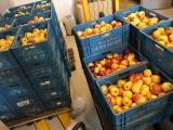 <h5>Voorraad appels</h5>